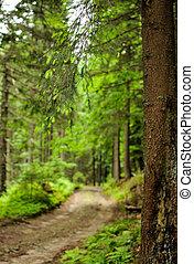 sapin, forêt, arbres