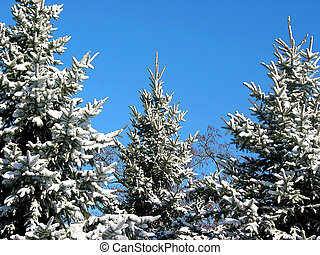 sapin, hiver, neige, arbres, 1, sous