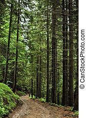 sapin, intérieur, forêt, arbres, vue