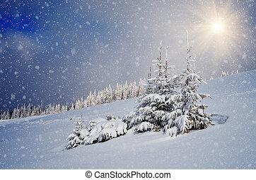 sapin, neige, arbres