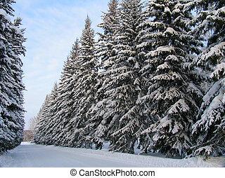 sapin, neige, arbres, sous