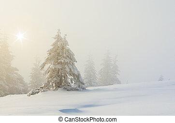 sapin, paysage, arbres hiver