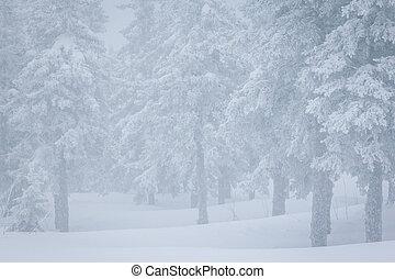 sapin, pins, arbres hiver, forêt