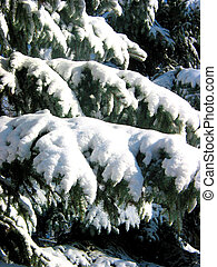 sapin, sous, branches, neige, hiver