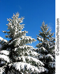 sapin, sous, neige, arbres, hiver
