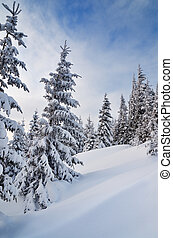 sapin, sous, neige, forêt