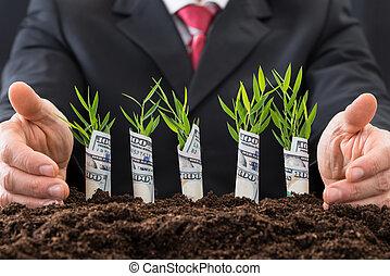 sapling, couvert, dollars, américain, homme affaires, protéger