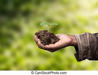 sapling, em, mão, como, de, agricultura