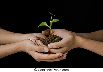 sapling in female hands