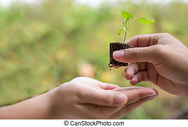 Sapling in hand as of lady