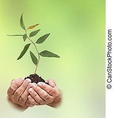 Sapling in hand