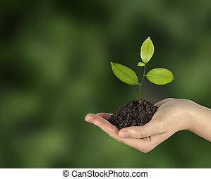 sapling in hands - sapling in hand