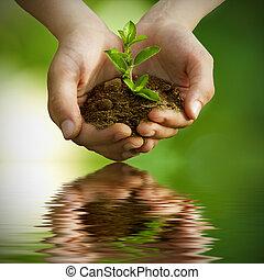 sapling, ind, hænder, hos, reflektion, ind, vand