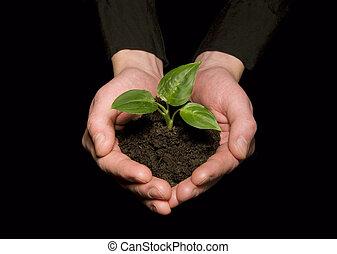 sapling, tenant mains