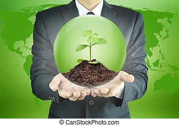 sapling, terrein, binnen, bol, groene, vasthouden, zakenman