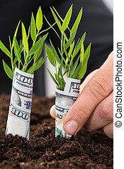 saplings, dollar, américain, tenue, homme affaires, couvert
