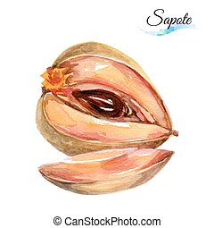Sapote - Watercolor fruit sapote isolated on white...