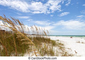 sarasota, strand, florida facit, siesta