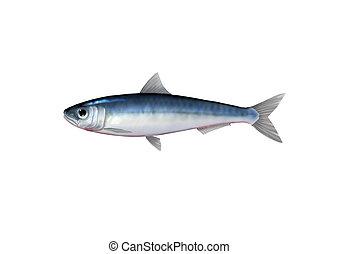 Digital illustration of a sardine
