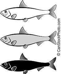 sardine - vector illustration
