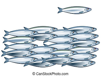 sardinha, cardume