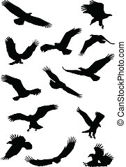 sas, madár, fying, árnykép