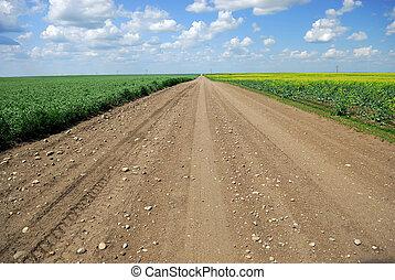 A dirt road in Saskatchewan farmland running between immature duram wheat and canola crops.