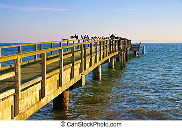 Sassnitz pier with many seagulls and cormorants