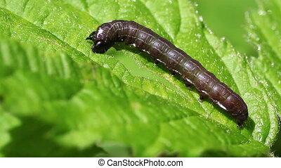 Satellite caterpillar