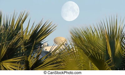 Satellite over palms. - Great satellite view over palms with...