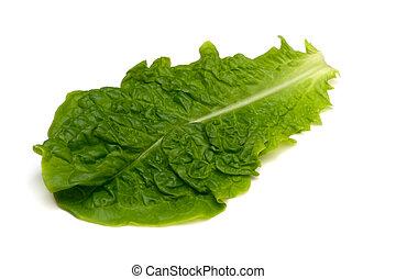 sativa, coreano, lettuce-lactuca