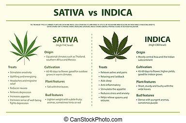 sativa, indica, infographic, orizzontale, vs