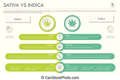 Sativa vs Indica horizontal business infographic