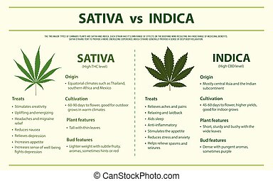 Sativa vs Indica horizontal infographic illustration about cannabis as herbal alternative medicine and chemical therapy, healthcare and medical science vector.
