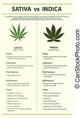 Sativa vs Indica vertical infographic