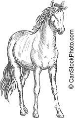 Satnding white horse sketch portrait