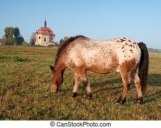 sattelplatz, abgehackt, appaloosa, gesteckt, steht, hat, pony