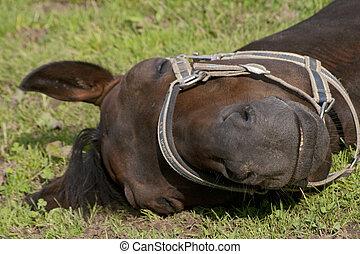 sattelplatz, pferd, schlaf, draußen