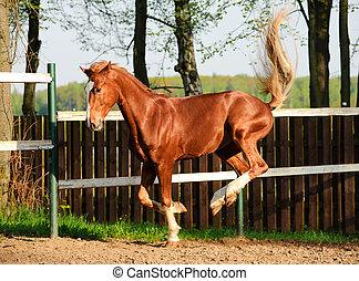 sattelplatz, pferd, spielende