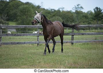 sattelplatz, pferd, traben, schwarz