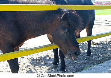sattelplatz, pony