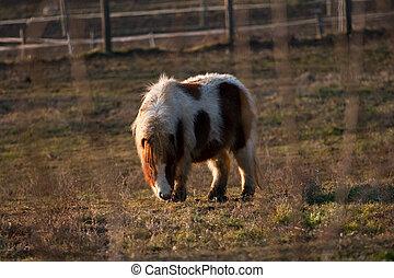 sattelplatz, pony, weiden
