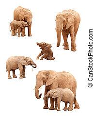 satz, freigestellt, elefanten