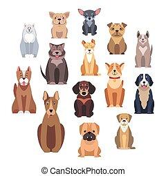 satz, freigestellt, hund, illustrationen, karikatur, rassen