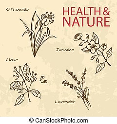 satz, natur, -, abbildung, gesundheit, handdrawn