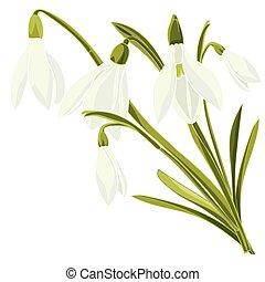 Schöne Blumen Satz Schneeglöckchen Schöne Satz Illustration