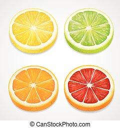 satz, scheiben, zitrusgewächs, zitrone, realistic., orange, vektor, limette, pampelmuse