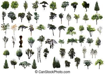 satz, von, bäume, freigestellt, weiß, hintergrund.