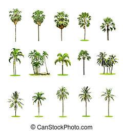 satz, von, handfläche, und, kokosnuss, bäume