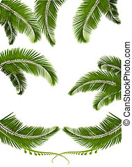 satz, von, hintergruende, mit, handfläche, leaves., vektor, abbildung